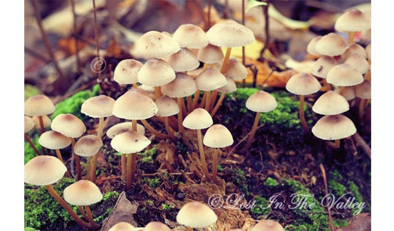 Mushroom Photo, Woodland Photography, Nature Photograph, Beige, Green, Brown, Fungi, Fine Art Print, Forest, Country Life, Rustic - LostInTheValleyPhoto