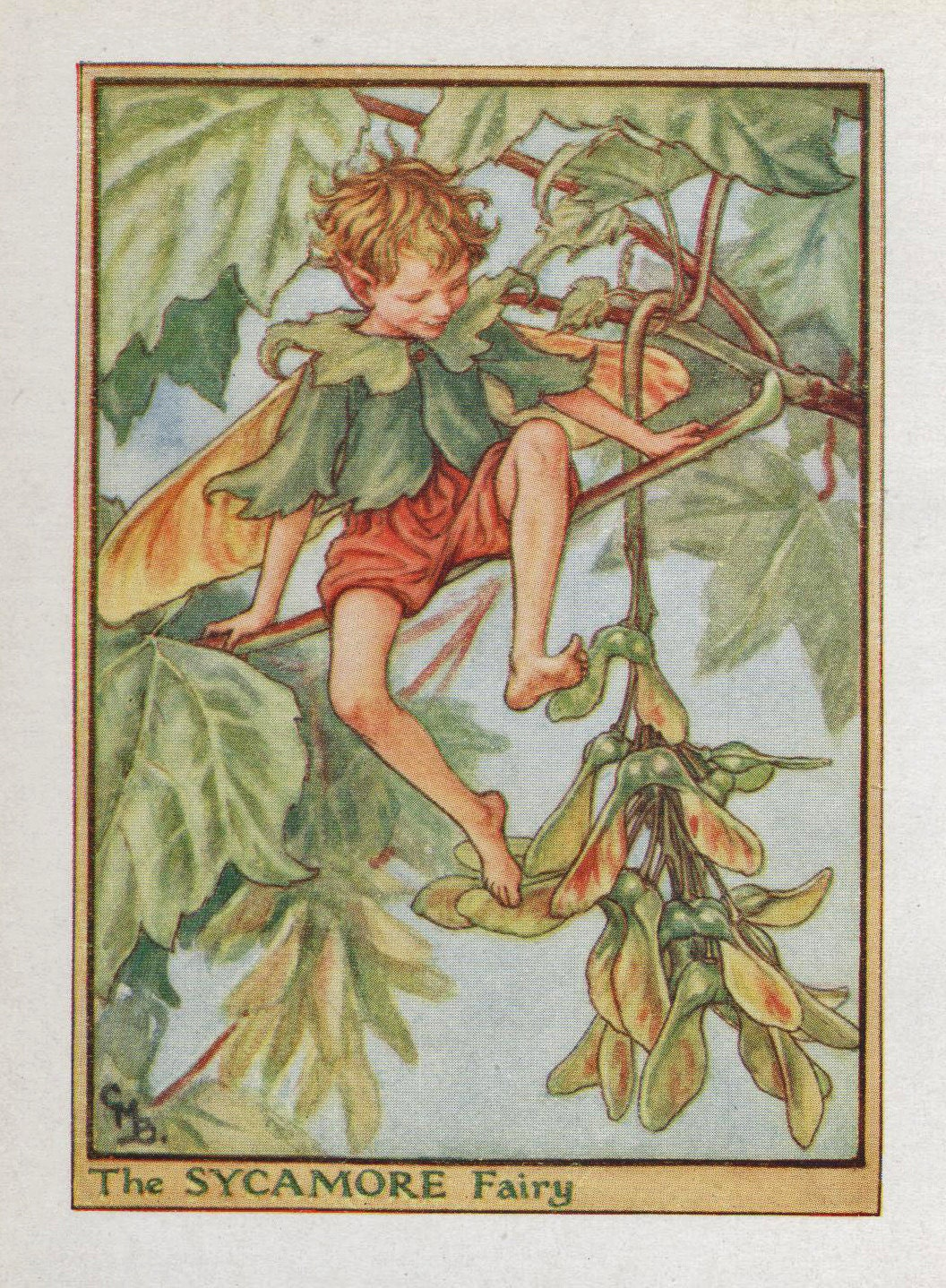 Flower Fairies THE SYCAMORE FAIRY Vintage Print c1930 by Cicely Mary Barker