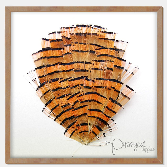 FE-1008 // Brown and Orange Striped Partridge Feathers Pad Applique - pussycatsupplies