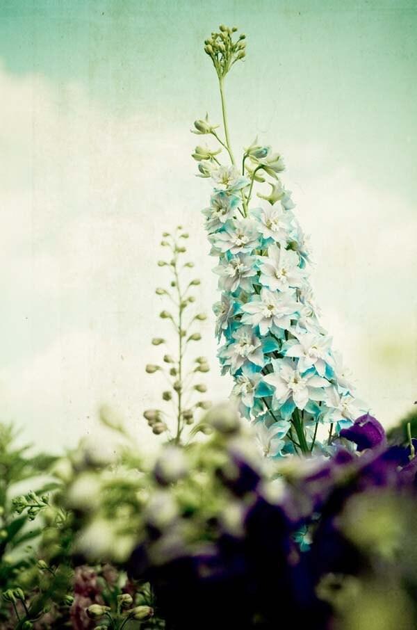 Что-то Blue.  причудливые фотографии цветов.  сад печати.  романтический декор дома.  мечтательный потертый шик дома.  пастельные стены искусства