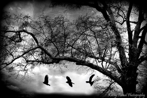 Gothic Nature Photography, Black and White Photography, Gothic Spooky Eerie Dark Ravens, Surreal Eerie Haunting Trees Ravens Photograph 8x12 - KathyFornal