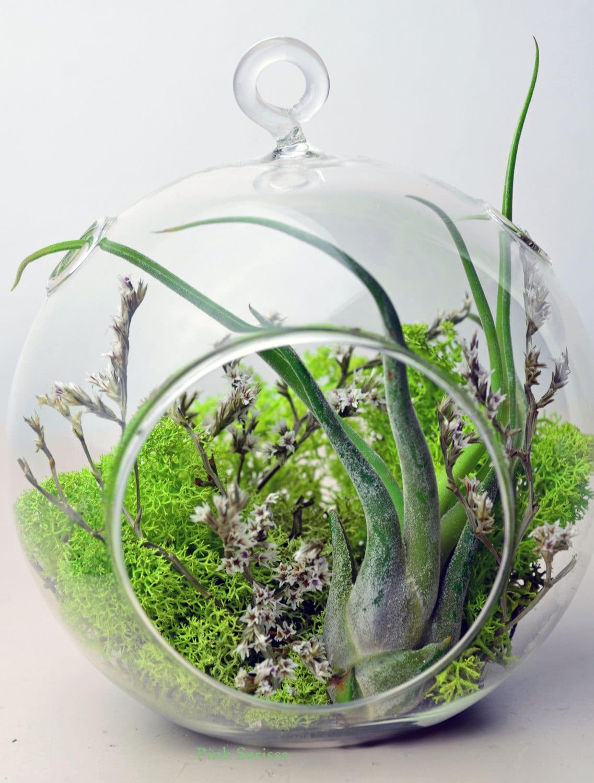 air plant terrarium hanging glass orb green by pinkserissa. Black Bedroom Furniture Sets. Home Design Ideas