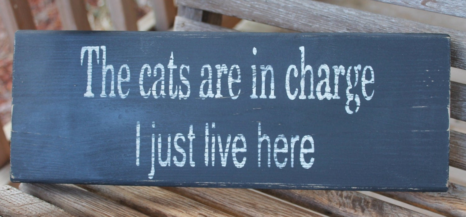 Quotes about cats also Quotes about cats likewise  on pet cat pography