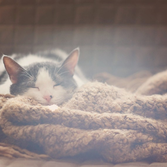pet photography, cat photograph, animal lovers gift, sunshine, cozy knitted blanket, cute sleeping kitty, white gray brown, kids room - MyanSoffia