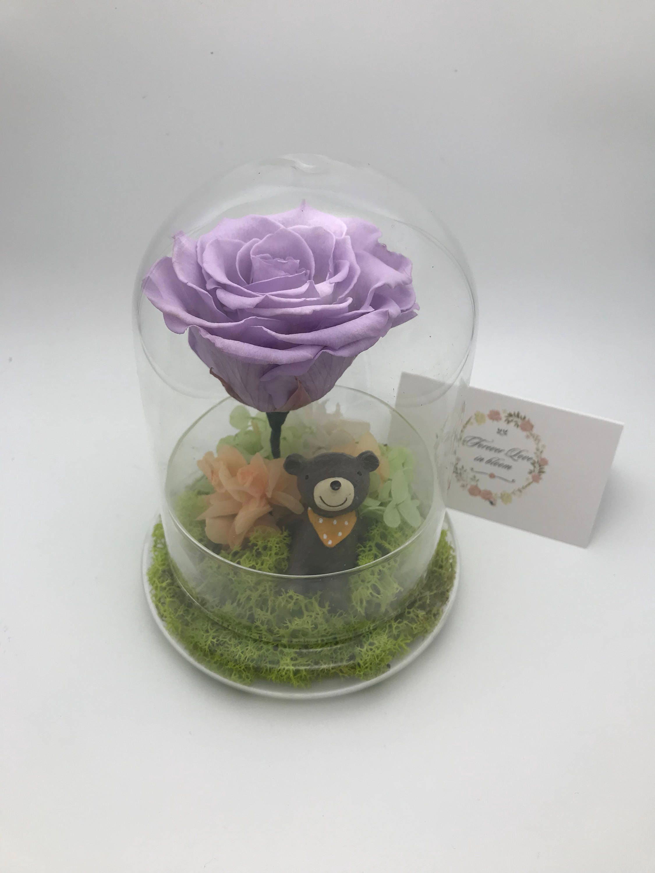 Image of Preserved Rose in Purple with Bear anniversary, birthday, wedding gift eternal, immortal rose, preserved flowers