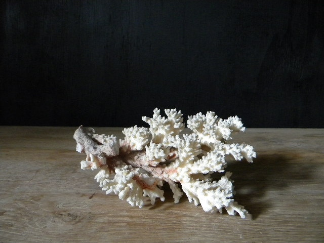 old coral branch. - HamptonHouseVintage
