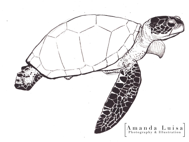 Line Drawing Sea Turtle : Items similar to sea turtle ink line illustration fine art