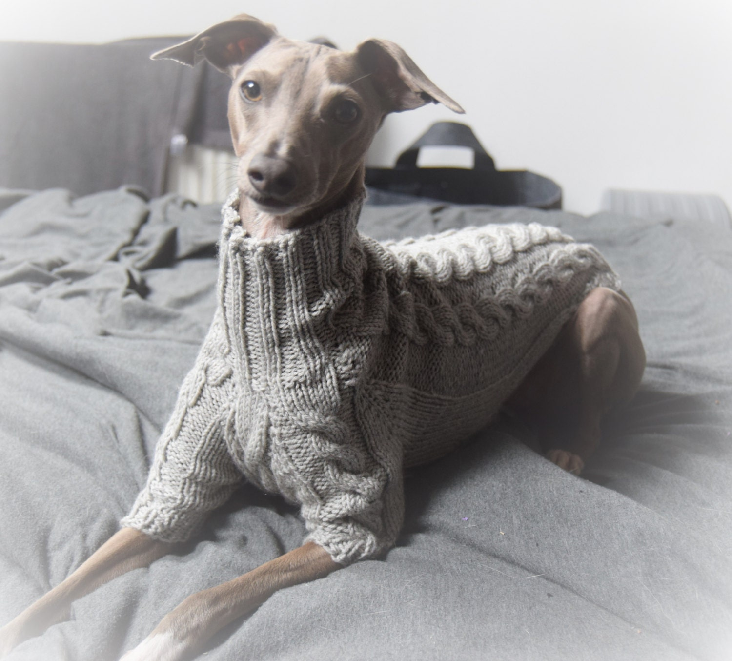 How to Care for an Italian Greyhound advise