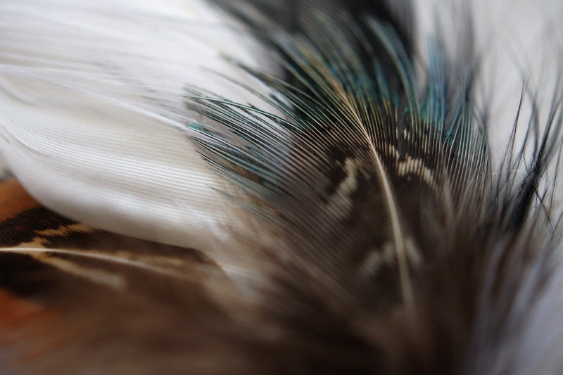 "Feather Photo, Bohemian, Minimalist Decor, White, Brown, Teal, Black, Signed Color 10x8"" Fine Art Wall Print - MySweetReveries"