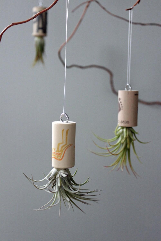 Live Plant Cork Ornament // Living Art // Unique Air Plant Decor - GemsOfTheSoil