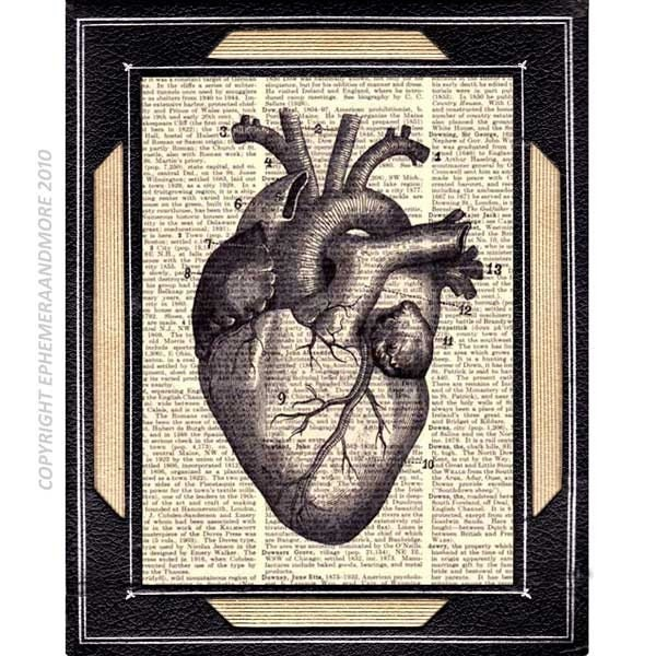 HUMAN HEART illustration anatomical art print by ...