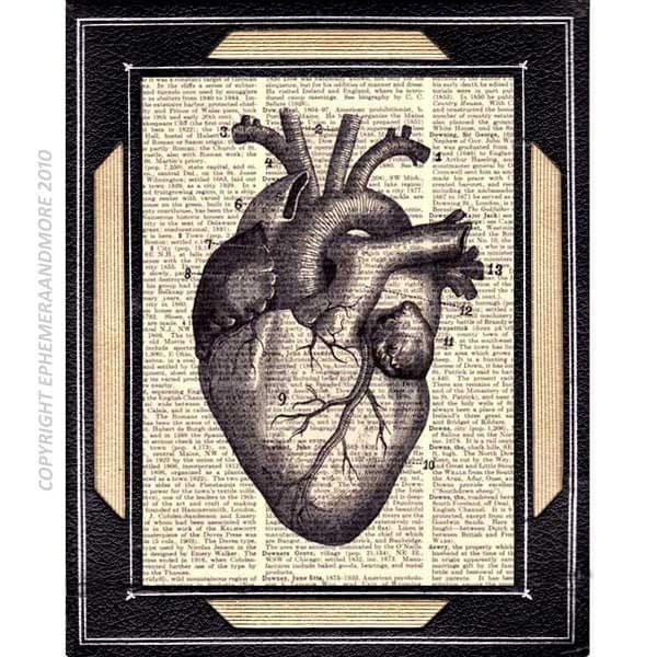 HUMAN HEART illustration anatomical art print by ...