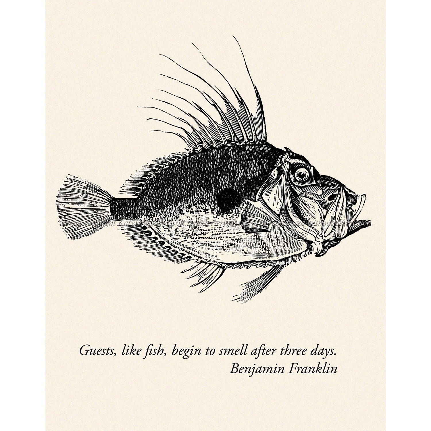 Fish Card Ben Franklin Quote House Guest Gift By Katydidscards