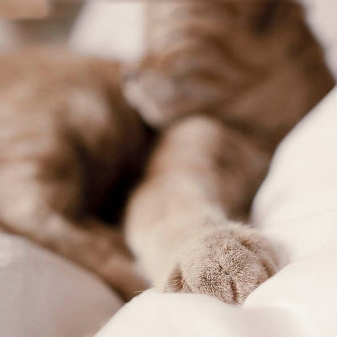 Cat Photography, autumn color, ginger tabby cat, beige, orange, sepia, stripes, cozy warm fall home decor - Raceytay