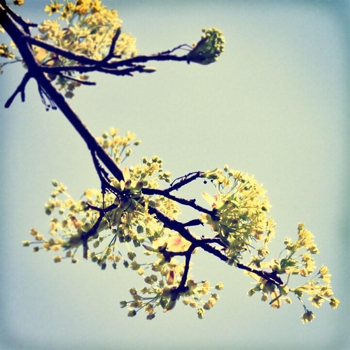 Blossoms Away - 8x8 Original Fine Art Photograph