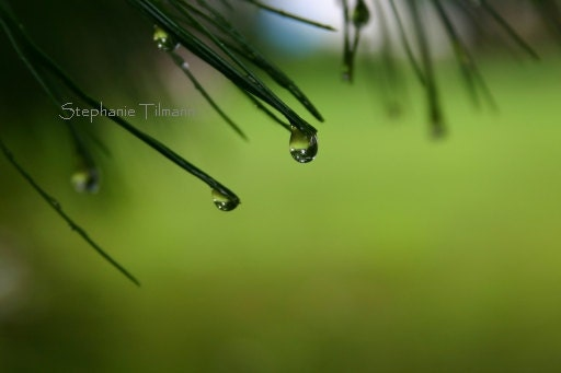 Spring Green,  Green Apple, Forest Green, Rain Drop - 4x6 Print - Other Sizes Available and Colors - Original Fine Art Photography