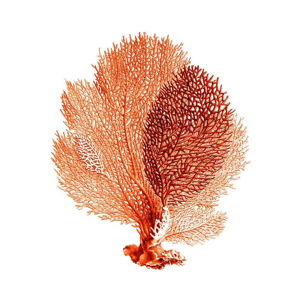 Sea Fan Coral Red Orange Nautical Vintage Style Art Print Beach House Decor - brightforest