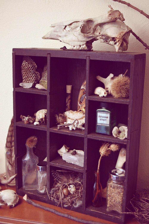 "Curiosity Cabinet. ""Lenore."" Cabinet of Curiosities."