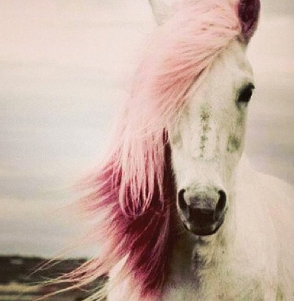 Horse Non-Toxic Hair Chalk - You Choose 1 Color - Large Stick - LiveLoveAlohaHair