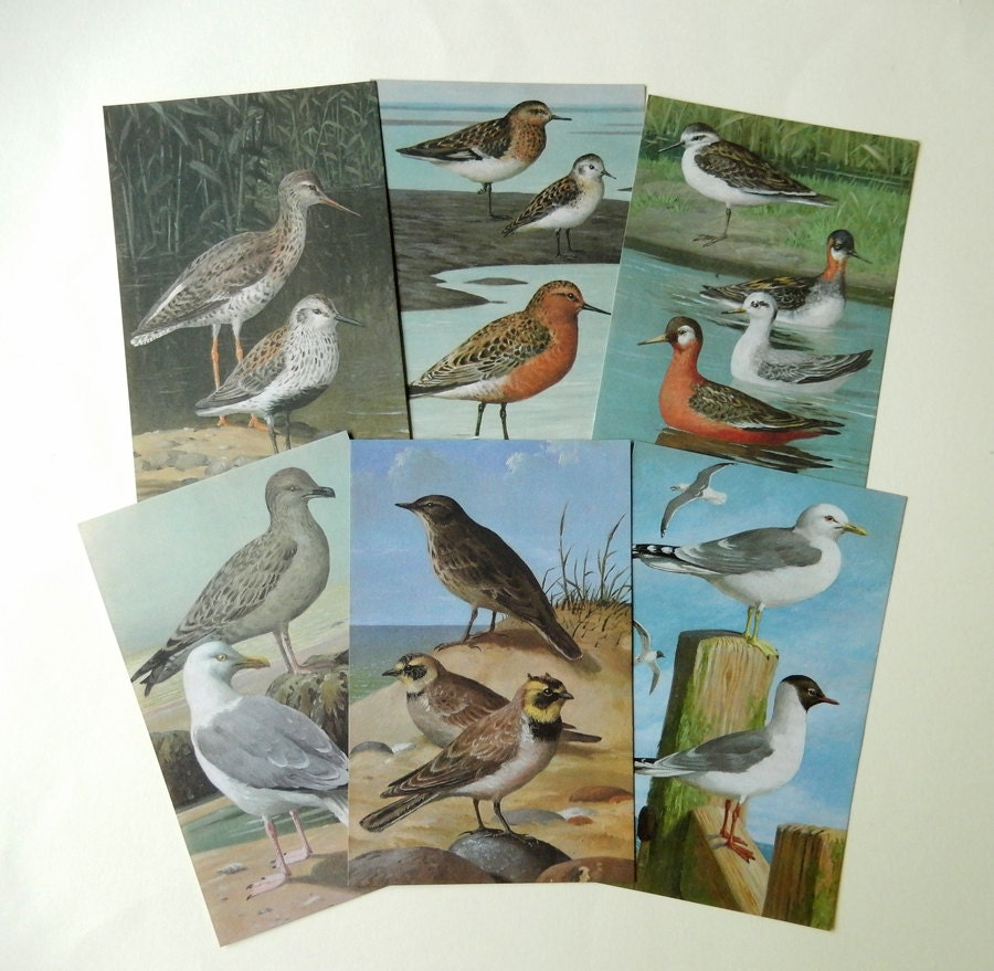 SALE 10 Vintage Bird Book Pages  Paper Ephemera Craft Pack  Supplies  Scrapbooking  Bunting Supply