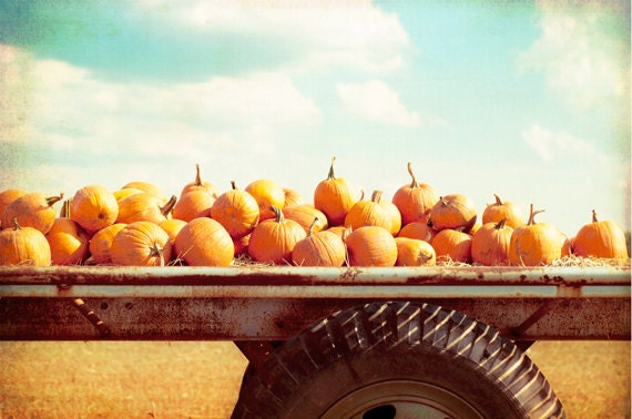 "Autumn Photography - pumpkins fall photography print - orange blue nature photo - october farm country rural - 8x12 Photograph, ""Harvest"" - CarolynCochrane"