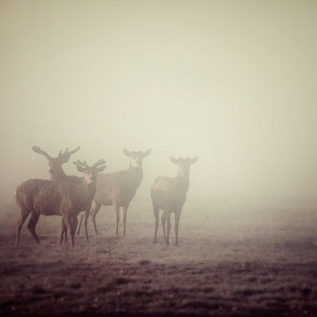 Deer in Fog, Nature Photography, Autumn, Minimal, Father's Day, Simple, Animals, For Him, Purple Decor, Plum - Cautionary Tales - EyePoetryPhotography