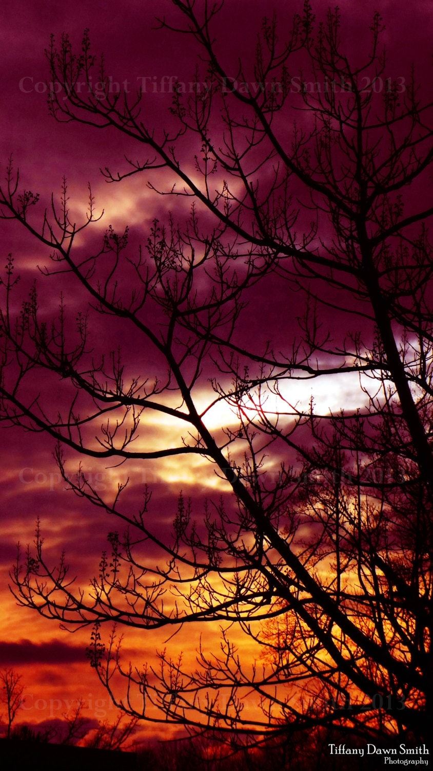Nature Photography - Sunset, Clouds, Purple, Orange, Tree, Silhouette 8x12 Original Fine Art Photography Print - TiffanyDawnSmith