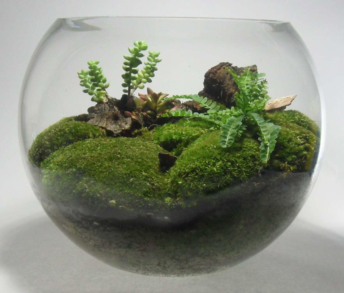 12 inch fish bowl glass terrarium by terrabrasilis on etsy. Black Bedroom Furniture Sets. Home Design Ideas