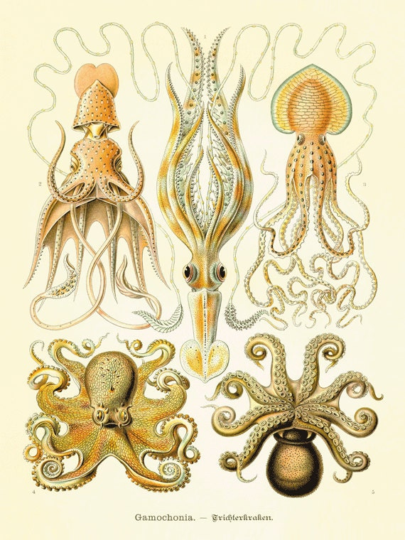 Octopus art antique print Victorian art print poster old prints Ocean Decor Natural History ocean art  large wall art nature print 12x16 art