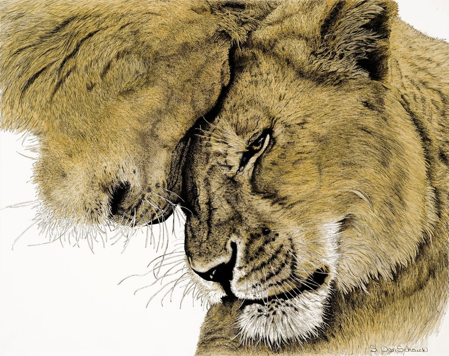Acceptance, two lions greeting. Artist enhanced and signed giclee reproduction colored pencil/ ink - FineArtBySherri