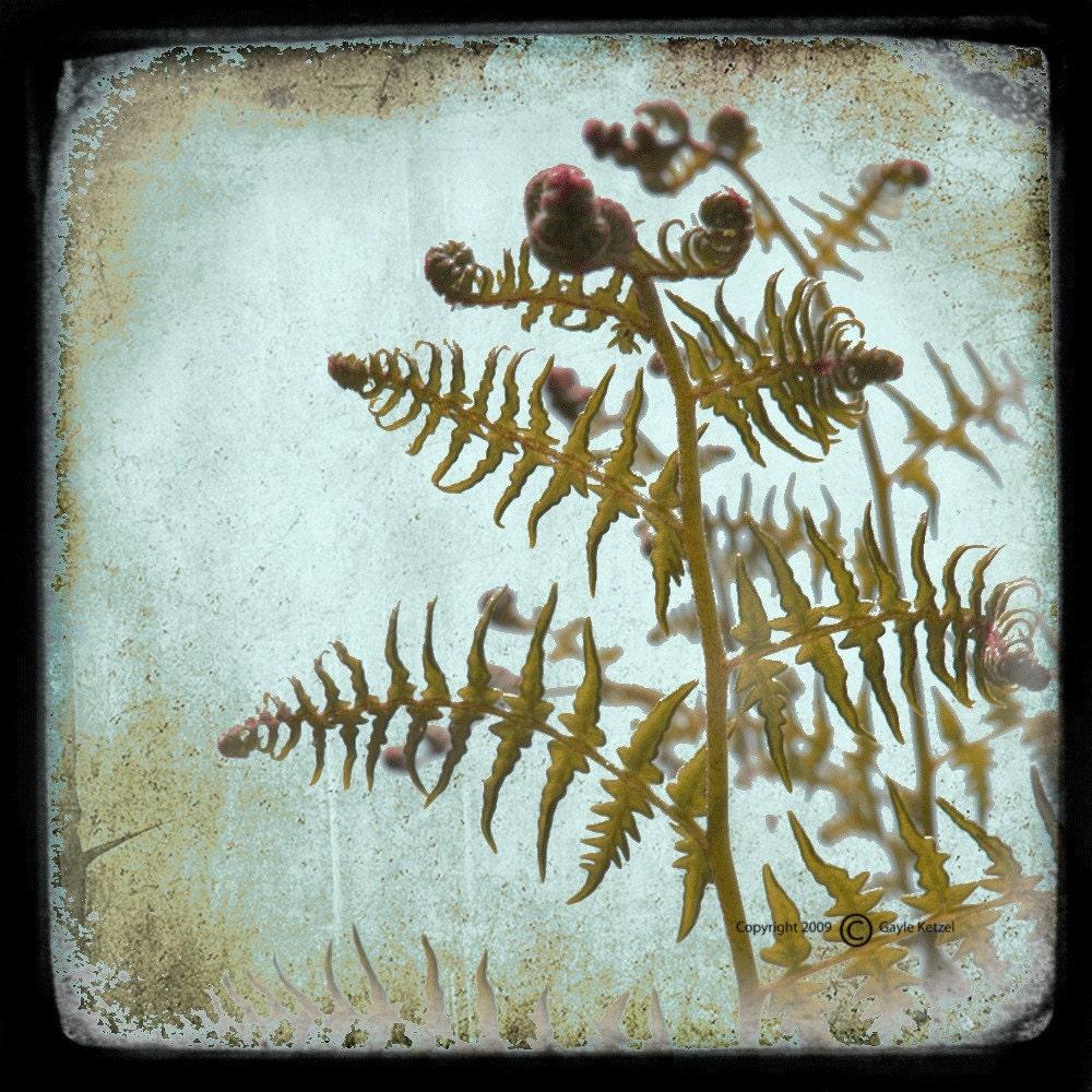 Green Blue Fern Photograph--The Unfolding--5x5 TTV Fine Art