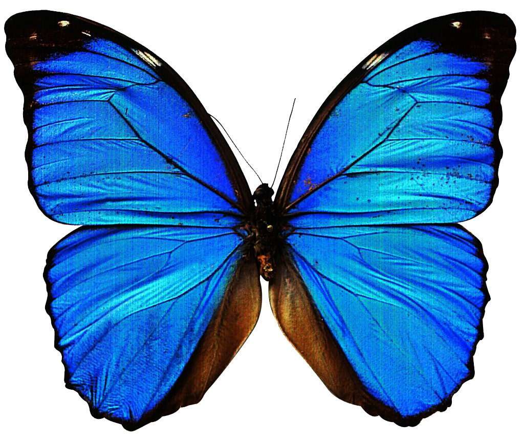 Blue Butterfly temporary tattoo 6x5cm by Inkweartattoos on ... - photo#28