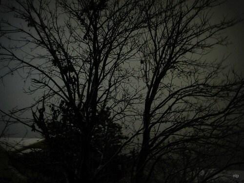 Cold Dark Winter Night
