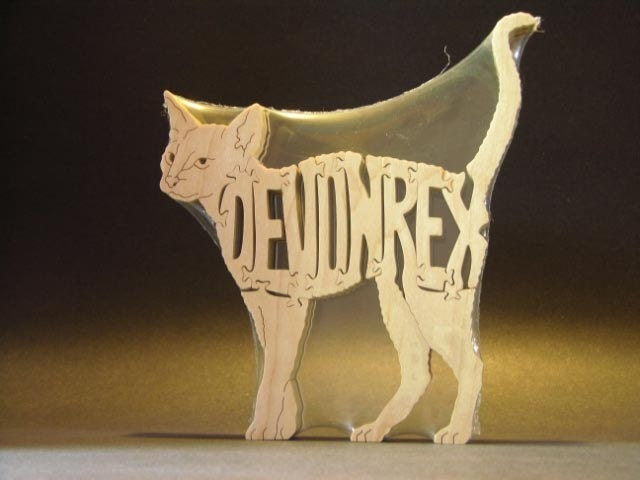 Devon Rex Cat Rescue Australia