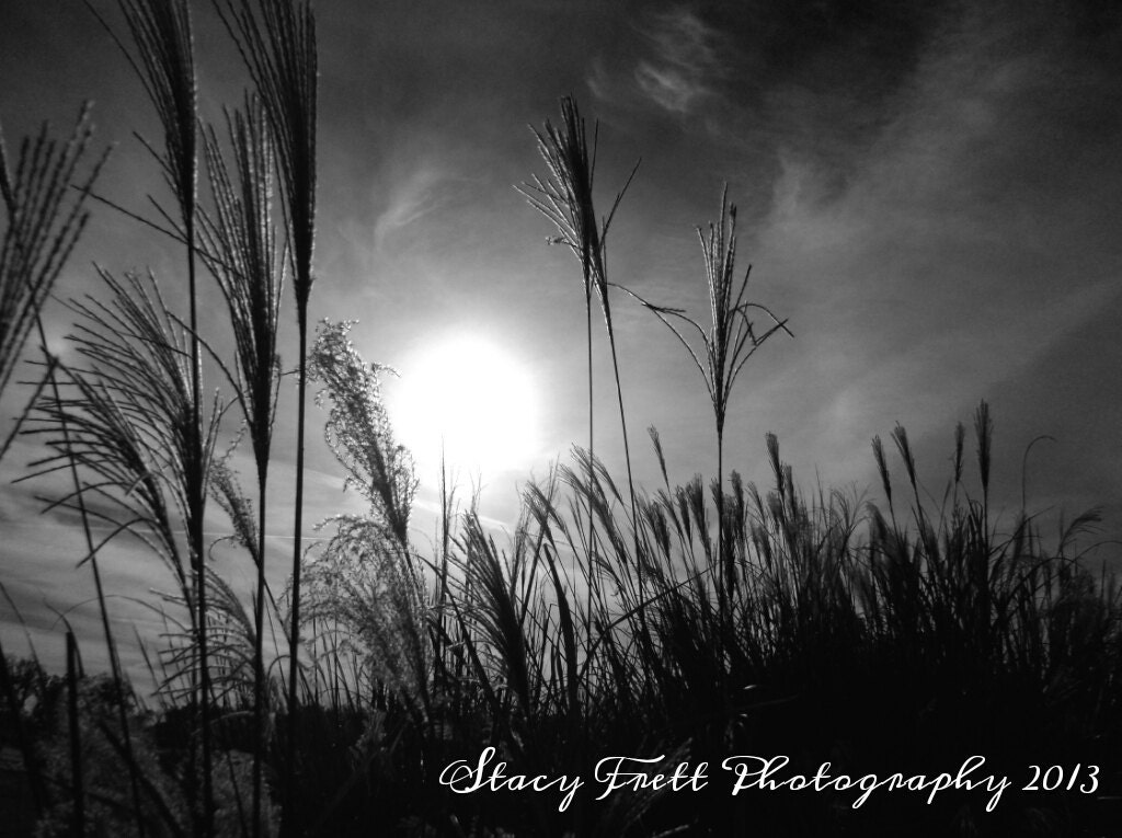 8X10 Fine Art Black and White Home Decor Photograph of a Field