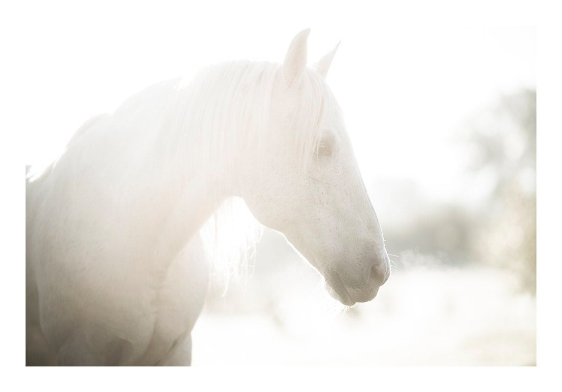 Horse photography - White horse print - horse wall art - white horse photo - surreal, dreamy, fantasy, whimsical horse art 20 x 30""