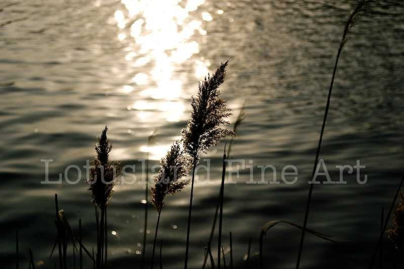 By the Water (8x10 Fine Art Print) - wlotus