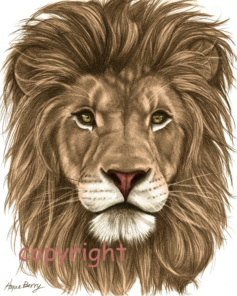 Lion Pencil Drawing Co...