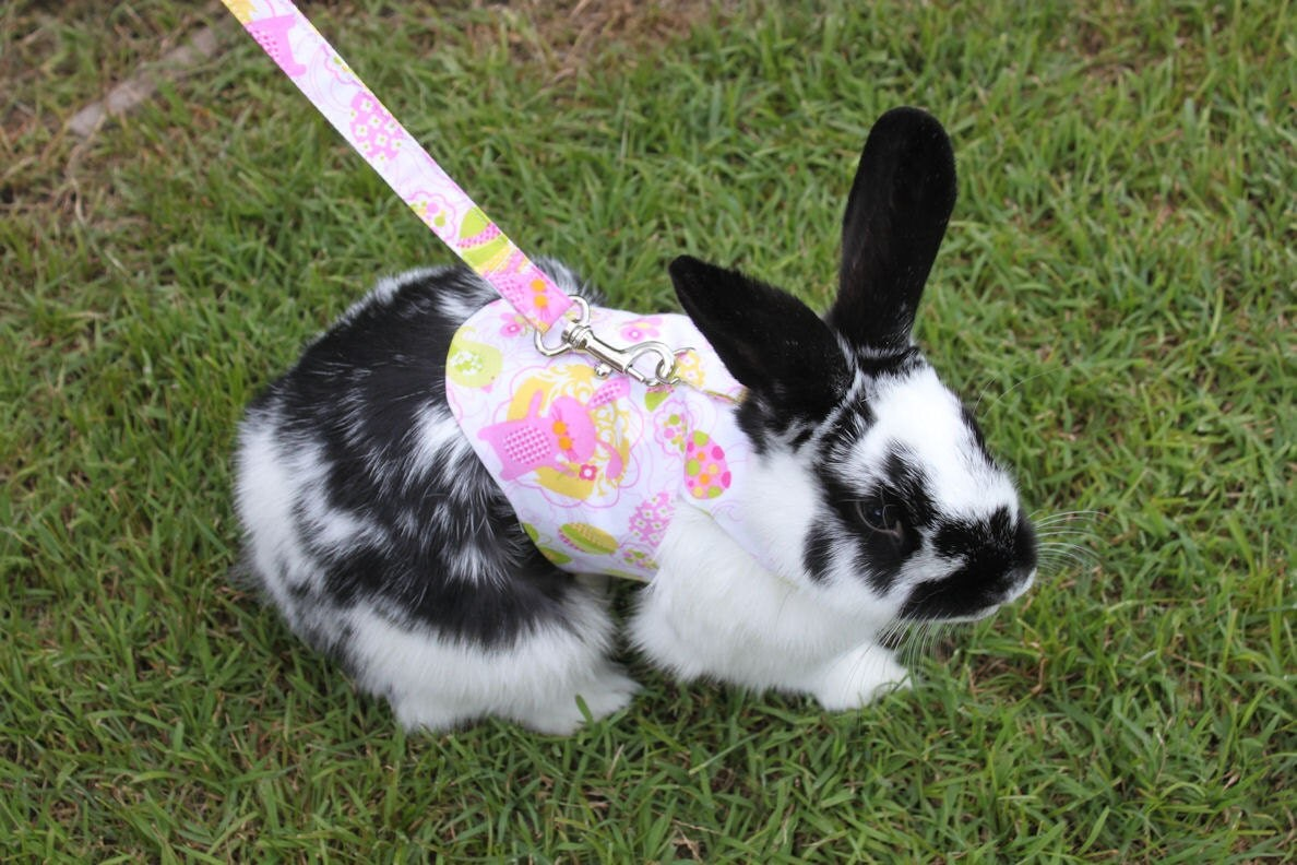 Bunny print harness with matching leash . Made to by ...