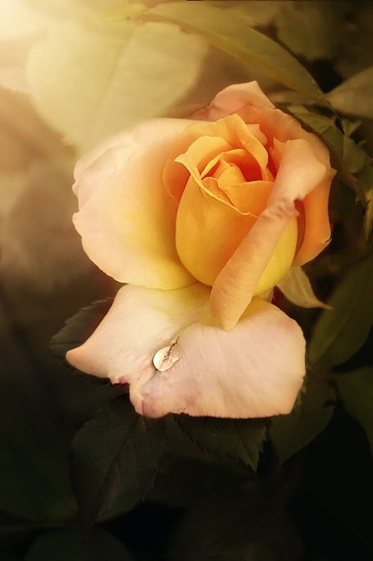 Flower Photography - orange beige romantic nature - fine art photo print floral botanical wall art - 8x10 Photograph, Roses bedroom  decor - RosesArtPhotography