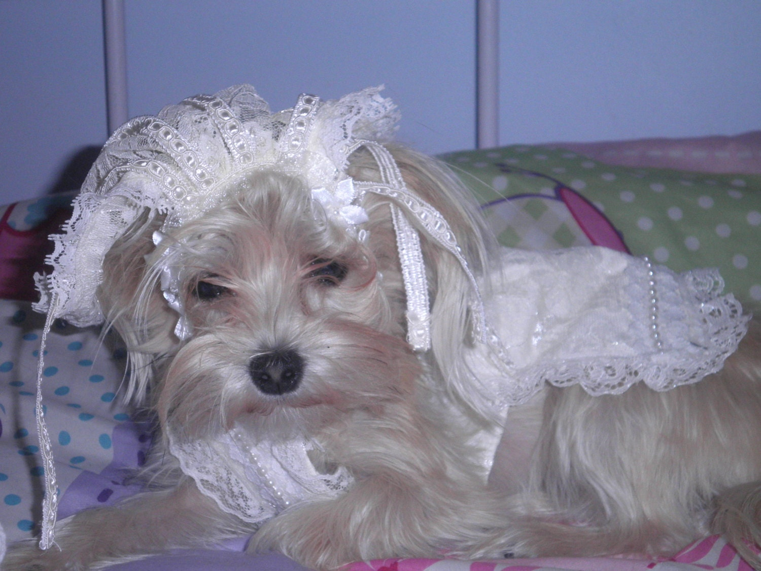 Cream wedding dress and veil hat for dog or cat x small with flowers