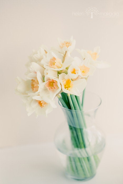 Irish Daffodils in Glass Vase, Cream, Yellow, Green, Romantic Art, Home Decor, Fine Art, Flower Photo, 4x6 Print - HelenMPhotography