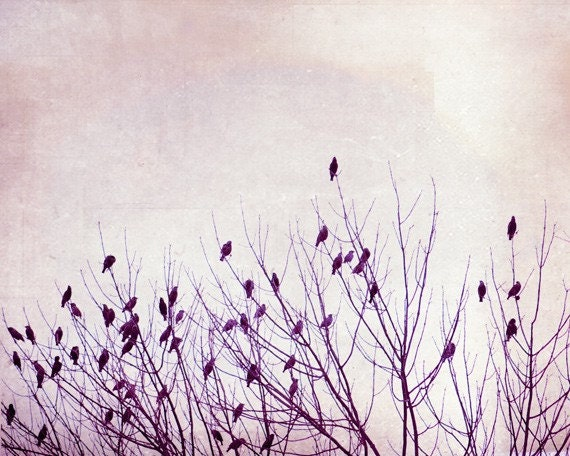 Large Bird Print - tree branches pale purple photography lavender nature photography nursery art prints baby pastel pale - 16x20 Photograph - CarolynCochrane