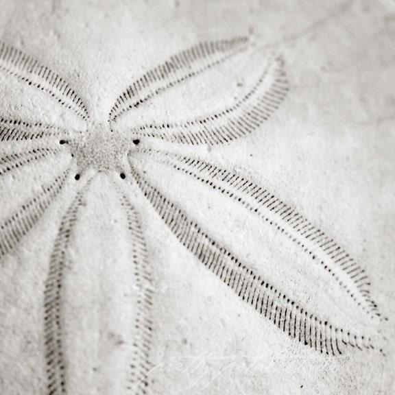 Black and White Fine Art Photograph, Macro Sand Dollar, Beach Art, Nautical, Star Design, Gritty, Home Decor, Wall Art, 8x8 SquarePrint - PrettyPetalStudio