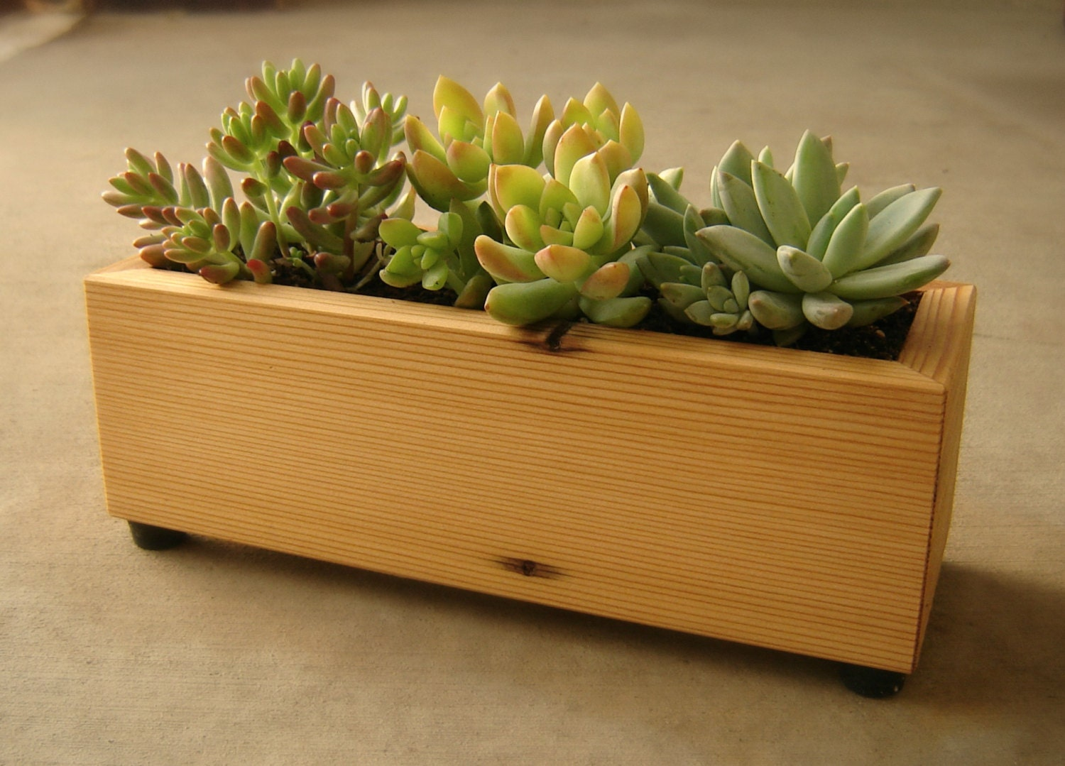 Succulent Planter Box in Recycled Cedar, With Gravel and Soil - andrewsreclaimed