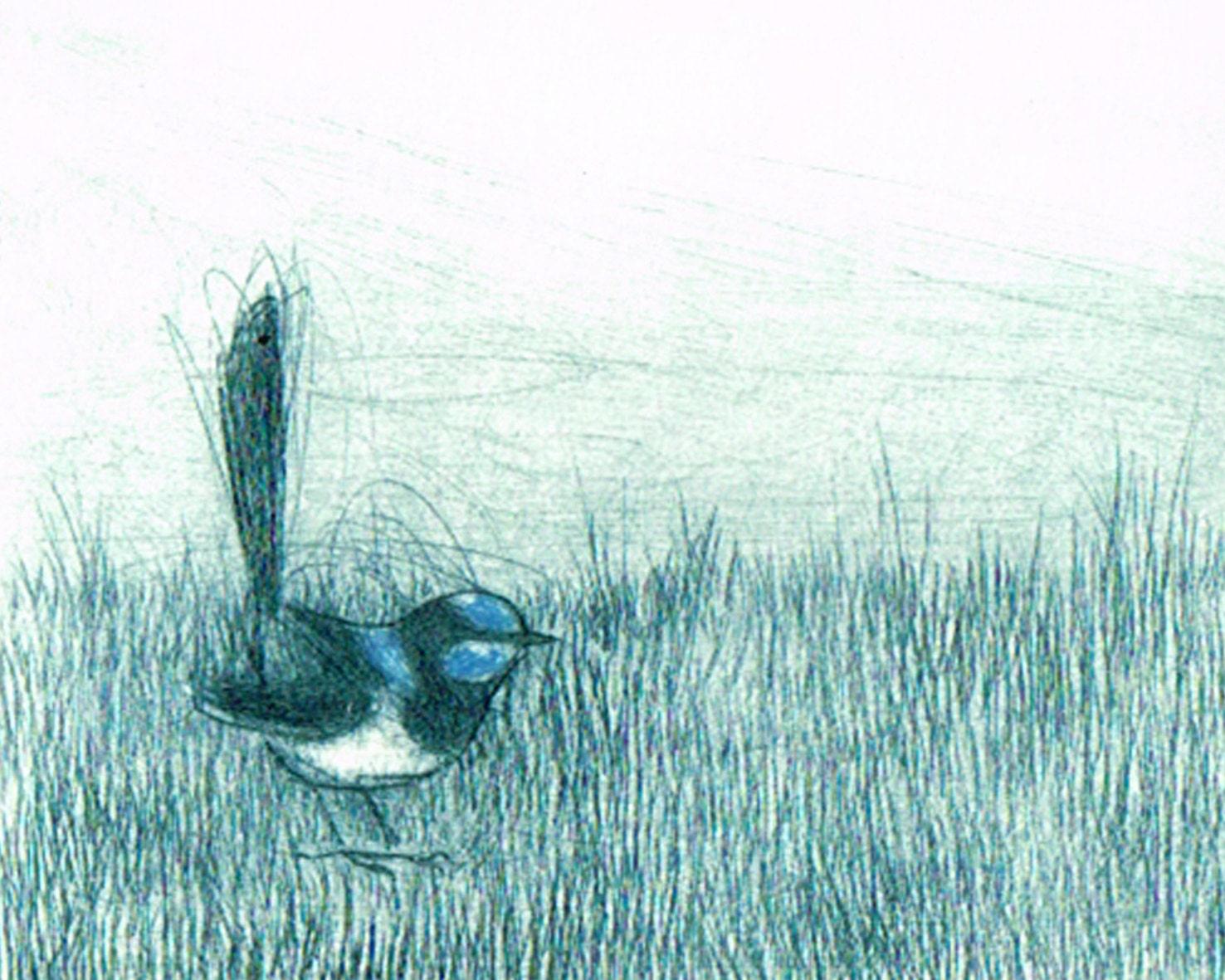 Etching, Fine Art, Hand Pulled Original Print, Australian Native BIrd, Blue Wren, Bird Art, - BridgetFarmerArtist