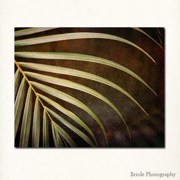 "Abstract Fern Leaf Photograph. Affordable 8""x10"" Modern Fine Art Nature Print. Caribbean. IN STOCK, Ready to Ship. - Briole"