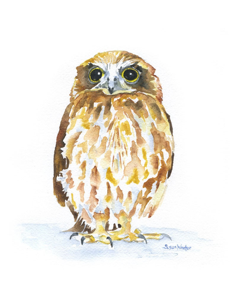 Owl Watercolor Painting Giclee Print 8 X 10 By Susanwindsor