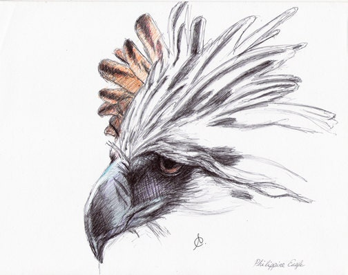 Items similar to Philippine Eagle, Ballpoint Drawing on Etsy