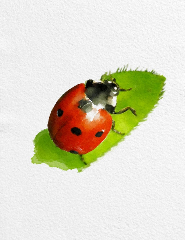 Http Www Etsy Com Listing 161961745 Ladybug Watercolor Painting Art Print
